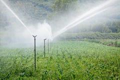 να ποτίσει πεδίων φυτά Στοκ φωτογραφία με δικαίωμα ελεύθερης χρήσης