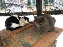 Να πολεμήσει δύο γάτα Στοκ φωτογραφία με δικαίωμα ελεύθερης χρήσης
