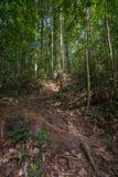 Να πραγματοποιήσει οδοιπορικό στο τροπικό δάσος του Μπόρνεο Στοκ εικόνα με δικαίωμα ελεύθερης χρήσης