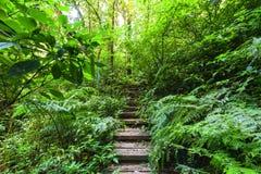 Να πραγματοποιήσει οδοιπορικό το ίχνος που οδηγεί μέσω του τοπίου ζουγκλών του τροπικού δάσους Στοκ εικόνες με δικαίωμα ελεύθερης χρήσης