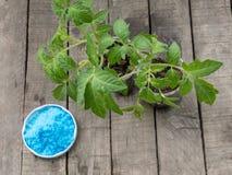 Να προετοιμαστεί και οξείδωση του χαλκού ψεκασμού στο φυτικό κήπο - sulfa χαλκού Στοκ εικόνα με δικαίωμα ελεύθερης χρήσης