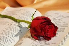 Να προκαλέσει το βιβλικό βάσανο Στοκ Φωτογραφία