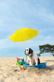 Να δροσίσει κάτω για το σκυλί στην παραλία Στοκ Εικόνες