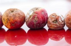 Να σαπίσει μήλων κόκκινος παλαιός ξηρός μήλων γήρανσης Στοκ φωτογραφίες με δικαίωμα ελεύθερης χρήσης