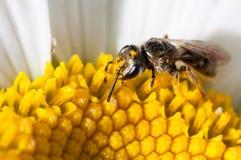Να σηκωθεί στενός και προσωπικός με το jorje η μύγα Στοκ Εικόνες