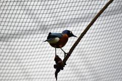 να σκαρφαλώσει πουλιών Στοκ Φωτογραφίες