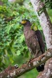 Να σκαρφαλώσει αετών φιδιών Στοκ εικόνες με δικαίωμα ελεύθερης χρήσης