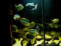Να συναρπάσει τα θαλάσσια πλάσματα σε ένα ενυδρείο στο Βερολίνο Γερμανία στοκ εικόνες