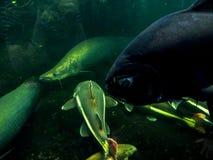 Να συναρπάσει τα θαλάσσια πλάσματα σε ένα ενυδρείο στο Βερολίνο Γερμανία στοκ εικόνα με δικαίωμα ελεύθερης χρήσης