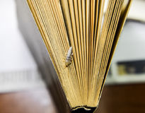 Να ταΐσει εντόμων με χαρτί - silverfish Silverfish στο τέλος του βιβλίου Στοκ Εικόνες
