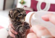 να ταΐσει με μπιμπερό το γατάκι στοκ εικόνες