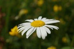 Να ταΐσει με το φως του ήλιου Στοκ εικόνες με δικαίωμα ελεύθερης χρήσης