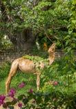 Να ταΐσει Dromedary με τα φύλλα αδανσωνιών Στοκ εικόνες με δικαίωμα ελεύθερης χρήσης