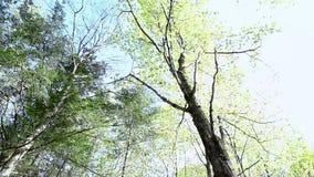 Να ταξιδεψει επάνω στο δάσος μια ηλιόλουστη ημέρα απόθεμα βίντεο