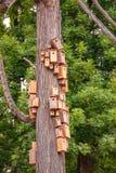 Να τοποθετηθεί κιβώτια που συσσωρεύονται στο σώμα δέντρων κέδρων Πόλη των birdhouses στο μίσχο δέντρων κέδρων Στοκ φωτογραφία με δικαίωμα ελεύθερης χρήσης