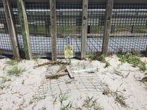 Να τοποθετηθεί χελωνών Στοκ Εικόνες