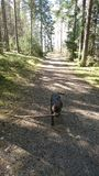 Να φέρει το μικρότερο ραβδί Στοκ φωτογραφία με δικαίωμα ελεύθερης χρήσης