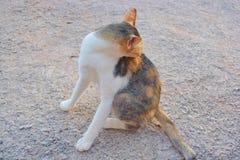 Να φαγουρίσει γατών Στοκ φωτογραφία με δικαίωμα ελεύθερης χρήσης