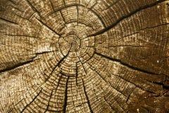 να φανεί ξύλινος Στοκ φωτογραφίες με δικαίωμα ελεύθερης χρήσης