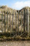 Να χλωμιάσει κάστανων και αμμόλοφοι άμμου Στοκ Εικόνες