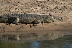 Νείλος Crocodryle στοκ φωτογραφίες