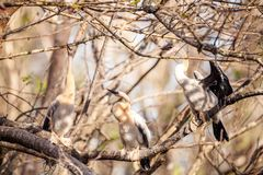 Νεανικό πουλί Anhinga αποκαλούμενο anhinga Anhinga Στοκ φωτογραφία με δικαίωμα ελεύθερης χρήσης