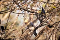 Νεανικό πουλί Anhinga αποκαλούμενο anhinga Anhinga Στοκ φωτογραφίες με δικαίωμα ελεύθερης χρήσης