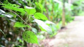 Νεαρά φυτικά δένδρα που καλλιεργούνται σε γόνιμο έδαφος υπό το φως του πρωινού απόθεμα βίντεο