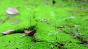 Νεαρά φυτικά δένδρα που καλλιεργούνται σε γόνιμο έδαφος υπό το φως του πρωινού φιλμ μικρού μήκους