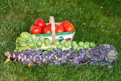 Νεαροί βλαστοί και ντομάτες των Βρυξελλών Στοκ Εικόνα