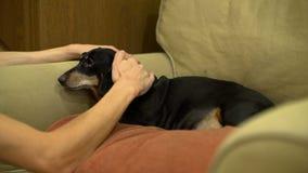 Νεαρός άνδρας Petting το σκυλί στο σπίτι απόθεμα βίντεο