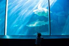 Νεαρός άνδρας που δείχνει έναν καρχαρία με το χέρι του Στοκ Εικόνες