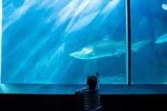 Νεαρός άνδρας που δείχνει έναν καρχαρία με το χέρι του Στοκ Φωτογραφίες
