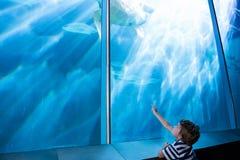 νεαρός άνδρας που δείχνει μια χελώνα θάλασσας με το δάχτυλό του Στοκ εικόνες με δικαίωμα ελεύθερης χρήσης