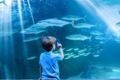 Νεαρός άνδρας που δείχνει τα ψάρια σε μια δεξαμενή με το δάχτυλό του Στοκ Φωτογραφία