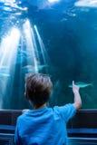 Νεαρός άνδρας που δείχνει τα ψάρια σε μια δεξαμενή με το δάχτυλό του Στοκ Εικόνες