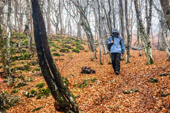 Νεαρός άνδρας στο δάσος φθινοπώρου Στοκ φωτογραφία με δικαίωμα ελεύθερης χρήσης
