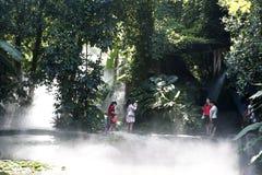 Νεαρός άνδρας στο τροπικό τροπικό δάσος στοκ φωτογραφία με δικαίωμα ελεύθερης χρήσης