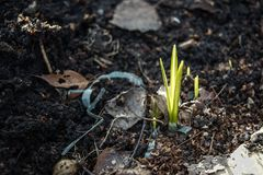Νεαρός βλαστός από τους σπόρους στο έδαφος Ρύπος οικολογίας τοπίων άνοιξη στοκ φωτογραφία