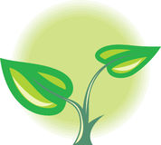 νεαρός βλαστός πράσινων φ&upsilon Στοκ Εικόνες