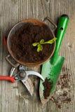 Νεαρός βλαστός στο χώμα με τα εργαλεία κήπων στοκ εικόνες με δικαίωμα ελεύθερης χρήσης