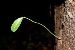 Νεαρός βλαστός φύλλων από το δέντρο στοκ εικόνες με δικαίωμα ελεύθερης χρήσης