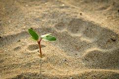 Νεαρός βλαστός στην παραλία Στοκ Εικόνα
