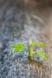 Νεαρός βλαστός στον κορμό δέντρων Στοκ Φωτογραφίες