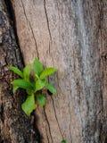 Νεαρός βλαστός στο δέντρο Στοκ φωτογραφία με δικαίωμα ελεύθερης χρήσης