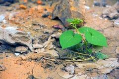 νεαρός βλαστός στο ξηρό έδαφος Στοκ Εικόνες