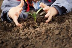 Νεαρός βλαστός στο χέρι παιδιών Στοκ φωτογραφίες με δικαίωμα ελεύθερης χρήσης