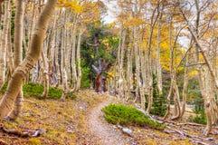Νεβάδα-μεγάλο μέγιστο ίχνος πάρκο-πολυασχόλων λεκανών εθνικό Στοκ Εικόνα
