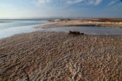Νεκρά άλατα θάλασσας Στοκ φωτογραφίες με δικαίωμα ελεύθερης χρήσης