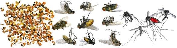 νεκρά έντομα Μακροεντολή Στοκ Φωτογραφίες